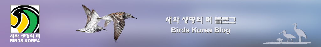 Birds Korea Blog