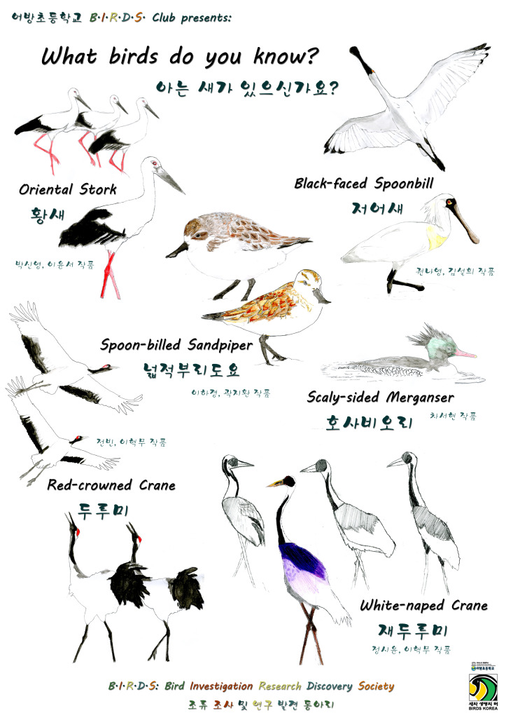 Final draft_ Birds Club Endangered Species 포스터