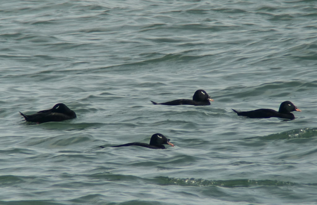 rs-stejscoters-DSC01020