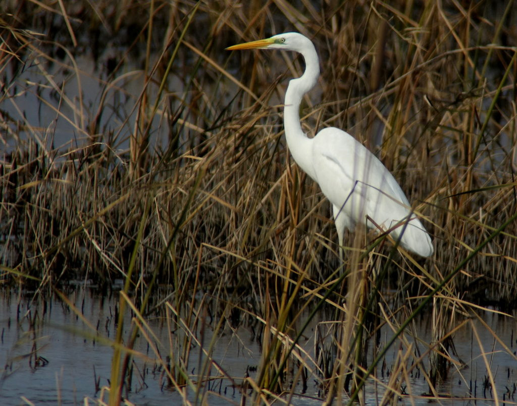 rs-greategret054-NM
